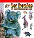 Les Koalas Et Autres Marsupiaux