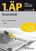 1. Äp Anatomie