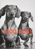 1000 Dogs