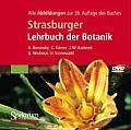 Strasburger Lehrbuch der Botanik:...