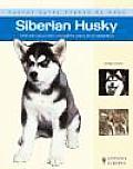 Siberian Husky / Siberian Husky