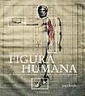 Historia De Las Teorias De La Figura Humana / History of the Theories of the Human Figure