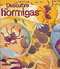 Descubre Las Hormigas