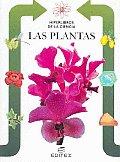 Las Plantas / Plants