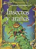 Insectos y aranas / Insects and Spiders