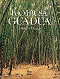 La Cultura del Cafe #2: Bambusa Guadua