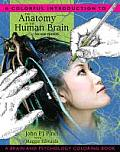 Colorful Introduction to the Anatomy of the Human Brain 2nd Edition A Brain & Psychology Coloring Book