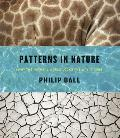 Patterns in Nature Why the Natural World Looks the Way It Does