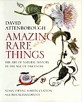 Amazing Rare Things The Art of Natural History in the Age of Discovery