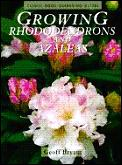 Growing Rhododendrons & Azaleas