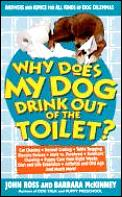 Why Does My Dog Drink Out Of The Toilet
