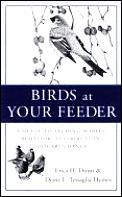Birds At Your Feeder