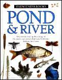 Pond & River Eyewitness
