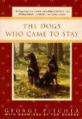 Dogs Who Came To Stay
