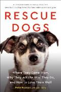 Rescue Dogs Where They Come From Why They Act the Way They Do & How to Love Them Well