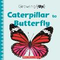 Caterpillar to Butterfly (Growing Up)