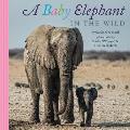 Baby Elephant in the Wild