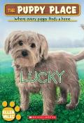 Puppy Place 15 Lucky