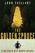 Golden Spruce