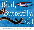 Bird Butterfly Eel