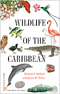 Wildlife of the Caribbean