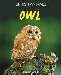 Owl. Stephen Savage