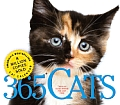 Cal08 365 Cats Page A Day