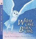White Owl Barn Owl