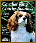 Cavalier King Charles Spaniels Everythin
