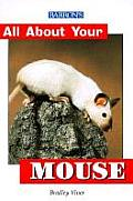 All About Your Mouse