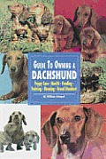 Guide to Owning a Dachshund