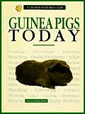 Guinea Pigs Today
