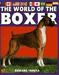 World Of The Boxer Akc Rank 13
