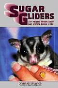 Sugar Gliders As Your New Pet