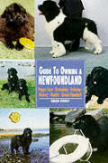 Guide To Owning A Newfoundland