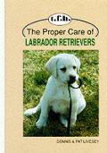 Proper Care Of Labrador Retrievers