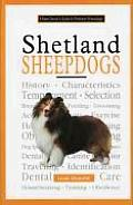 New Owners Guide To Shetland Sheepdogs