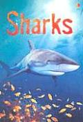 Sharks Information for Young Readers Level 1