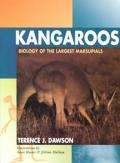 Kangaroos Biology Of The Largest Marsupi