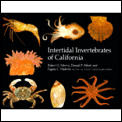 Intertidal Invertebrates Of California