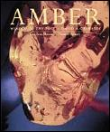 Amber Window To The Past