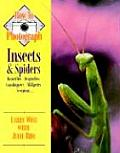 How To Photograph Insects & Spiders