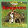 Kangaroos Baby Animals