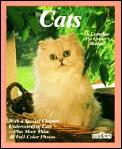 Cats How To Take Care Of Them & Unde
