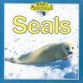 Seals Baby Animals