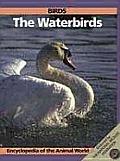 Birds: The Waterbirds