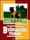 Bullmastiffs Today