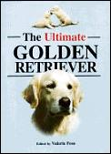 Ultimate Golden Retriever