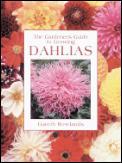 Gardeners Guide To Growing Dahlias
