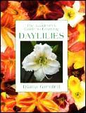 Gardeners Guide To Growing Daylilies